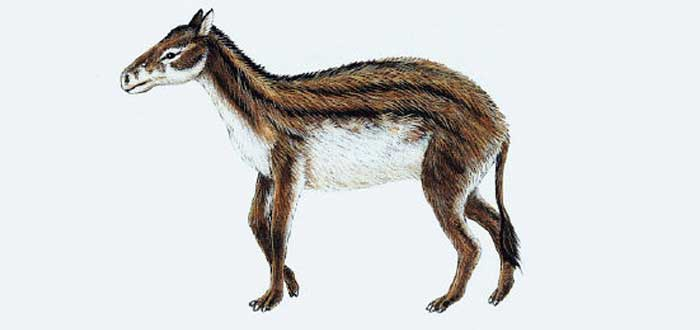 hiracoterium, ¿Por qué los caballos tienen pezuñas?