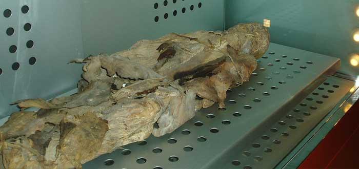 Momias Guanches parecidas a las egipcias. ¿Las conocías?
