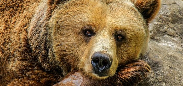 oso, sobre lord byron