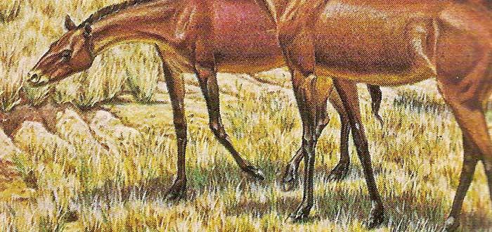 Parahippus, ¿Por qué los caballos tienen pezuñas?