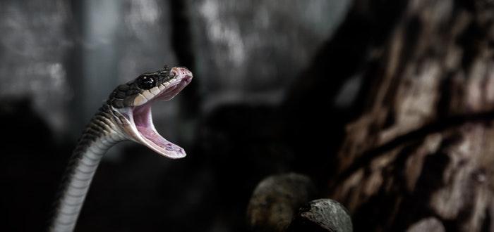 serpiente boca abierta, lugares prohibidos