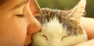 tu gato te ama