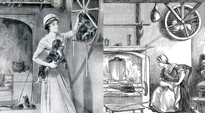 Turnspit, la raza de perros esclavizada en las cocinas inglesas