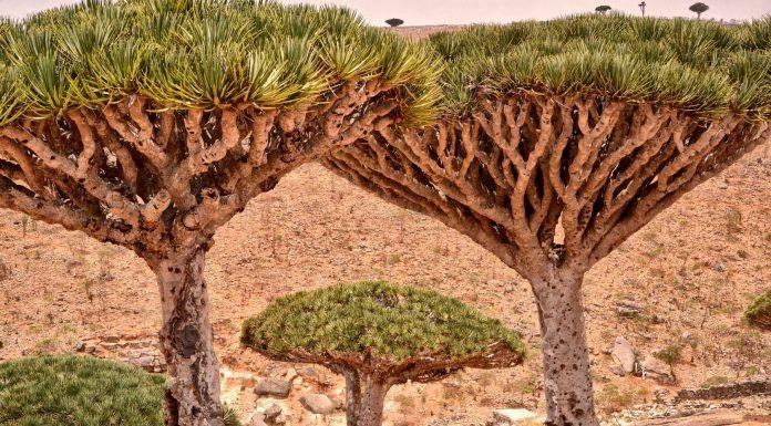 Socotra, la isla árabe que parece un mundo extraterrestre