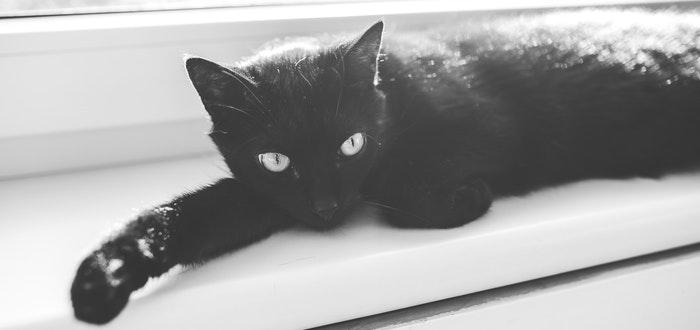 gato negro, datos curiosos de Inglaterra