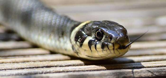Comprobado: El miedo a arañas y serpientes es de origen evolutivo