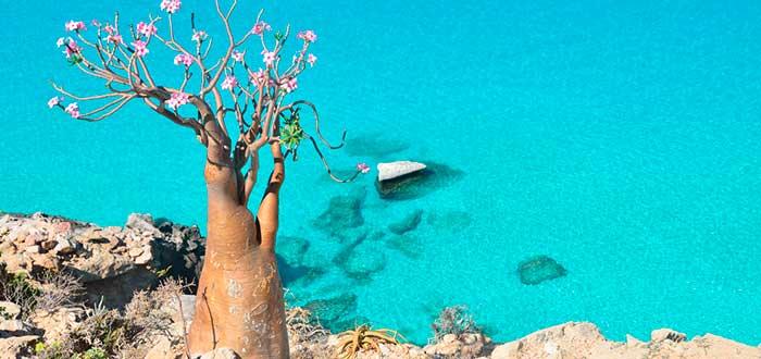 socotra, isla árabe