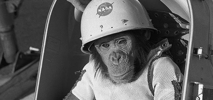 animales en el espacio, ham el mono