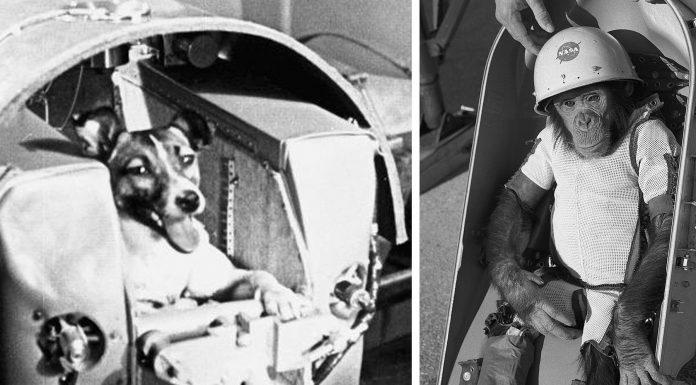 Animales enviados al espacio. Su historia