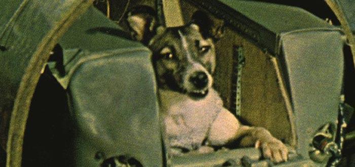 animales enviados al espacio, perrita Laika