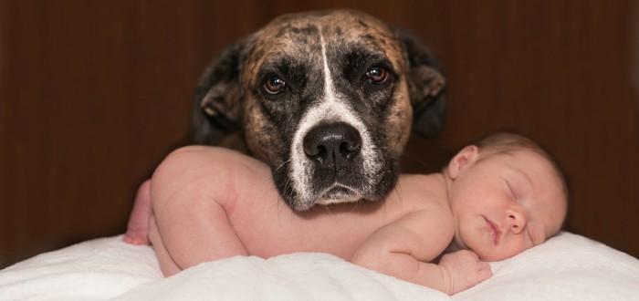 respeto por animales y niños, vivir en el siglo XIX