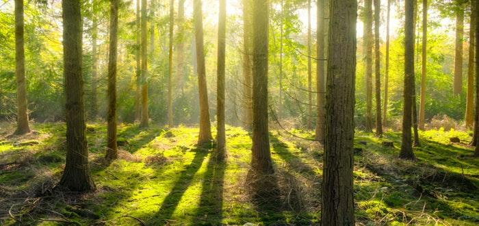 bosque, reforestación, salvar al mundo
