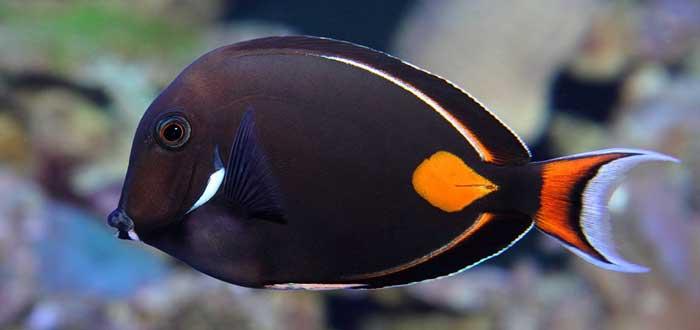 20 curiosidades de los peces que te encantar saber for Productos para estanques de peces