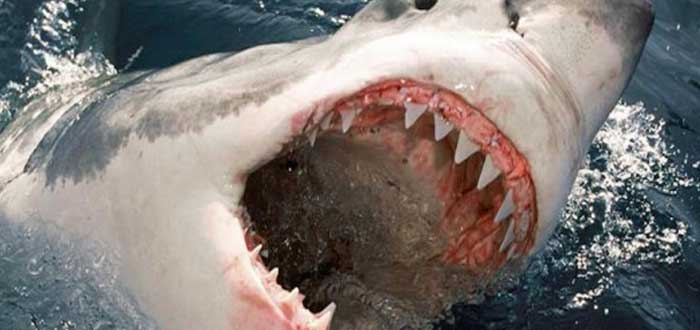 20 Curiosidades de los peces que te encantará saber, dientes de tiburón