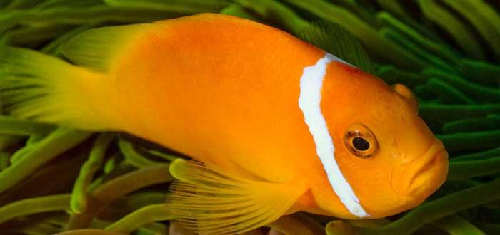 20 Curiosidades de los peces que te encantará saber, de qué se alimentan los peces