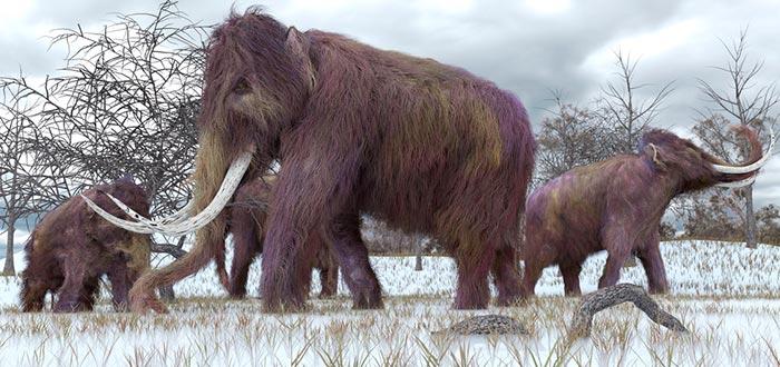 curiosidades del mundo, historia, mamut