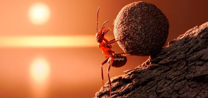 curiosidades del mundo, hormiga, superpoder