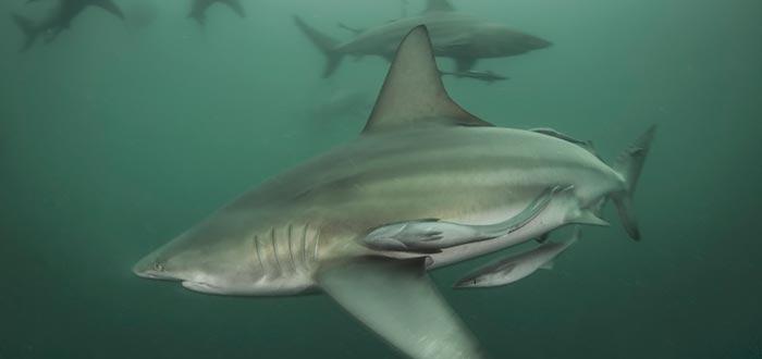 curiosidades del mundo, tiburón ataque