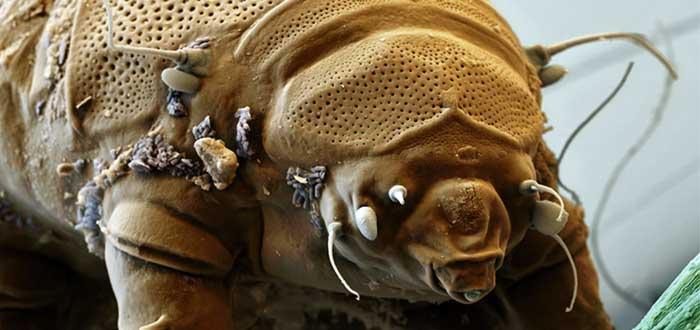 Oso de Agua: resiste 30 años sin comer ni beber. ¡Impresionante!