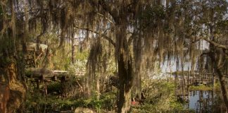 Este Parque de Disney abandonado se ha estado pudriendo durante los últimos 15 años