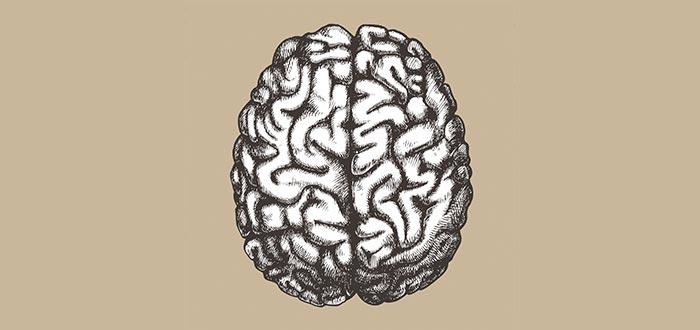 partes del cerebro, hemisferios