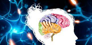 Partes del cerebro. ¿Las conoces todas?