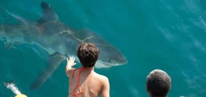 10 Películas de Tiburones que no puedes perderte