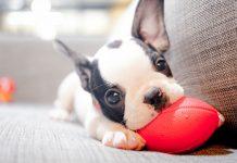 ¿Por qué empatizamos más con los perros que con las personas?
