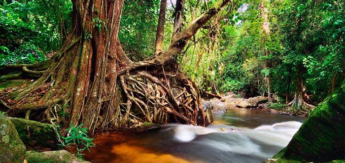 río camboya, personas que asistieron a sus propios funerales