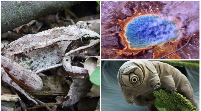 4 organismos que sobreviven en condiciones extremas. ¡Descúbrelos!