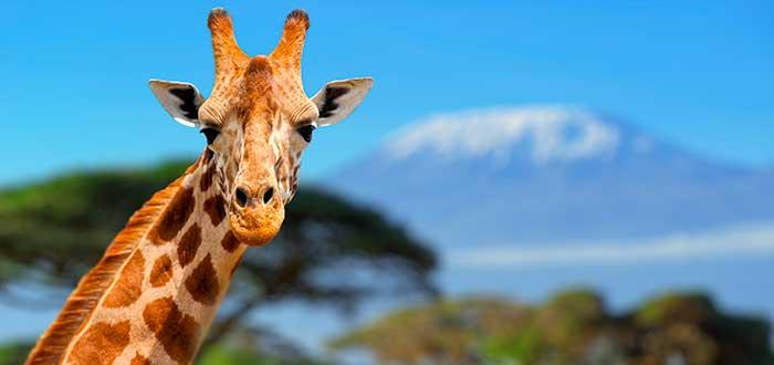 7 Curiosidades del mundo animal y vegetal 3