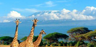 7 Curiosidades del mundo animal y vegetal