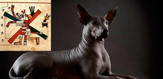 Conoce la historia de los Xoloitzcuintles, los perros aztecas que guiaban a sus dueños hasta el inframundo