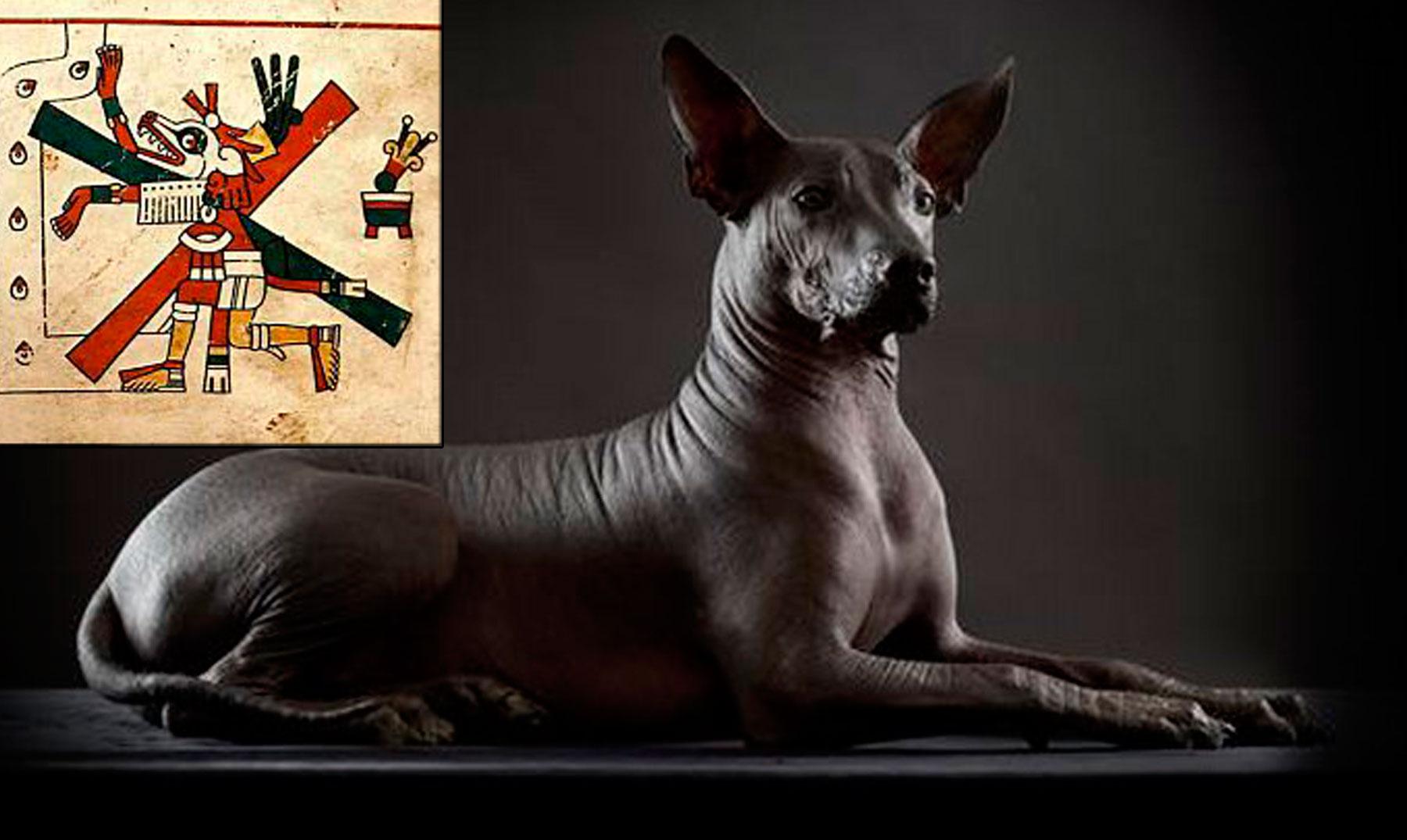 Resultado de imagen de los Xoloitzcuintles, los perros aztecas que guiaban a sus dueños hasta el inframundo