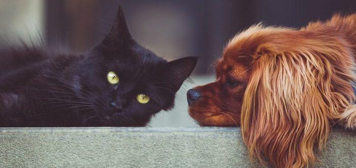 ¿Son más inteligentes los perros o los gatos La ciencia responde
