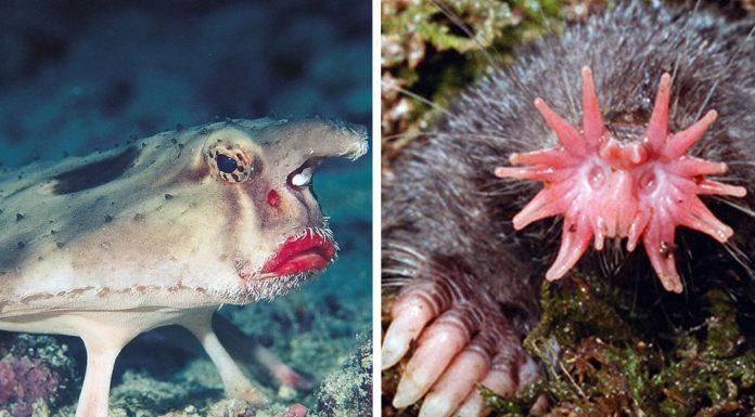 7 de los considerados animales más feos del mundo