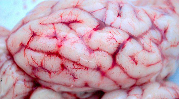 El banco de cerebros de la Universidad de Harvard
