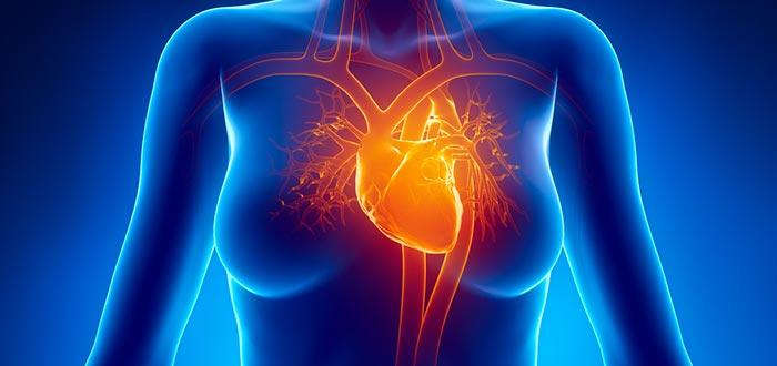 Curiosidades del corazón. Un órgano esencial y asombroso