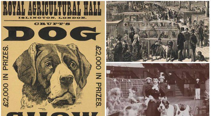 El origen victoriano de las controvertidas exposiciones caninas