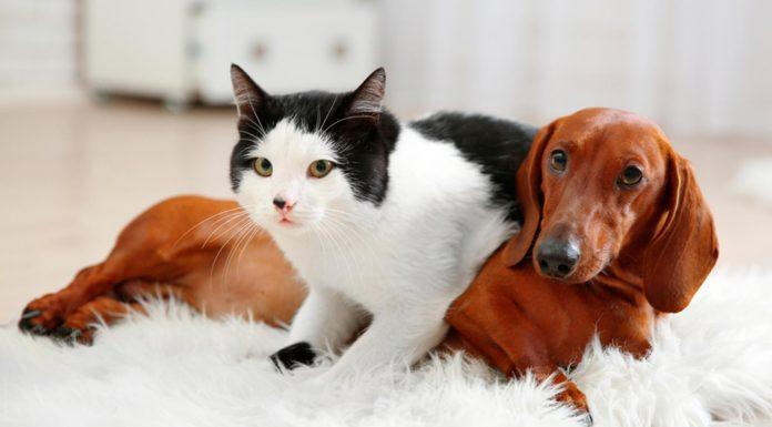 ¿Son más inteligentes los perros o los gatos? La ciencia responde