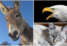 Sonidos de Animales. ¿Sabrías llamarlos por su nombre? Apréndelos