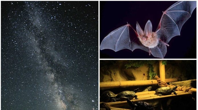 5 terribles efectos que no sabías de la contaminación lumínica