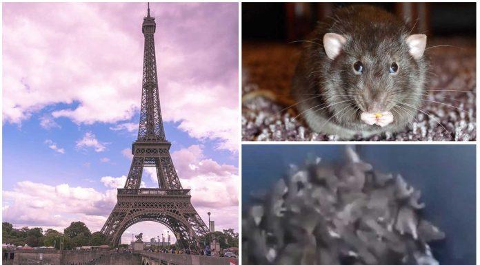 El estremecedor vídeo del contenedor lleno de ratas en París y la polémica