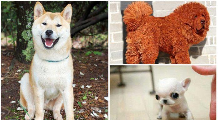 25 Curiosidades de los perros que te asombrarán