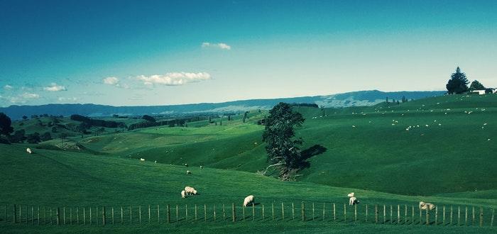 curiosidades de países, Nueva Zelanda