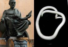 heces de antiguos griegos