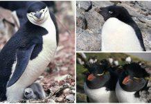 Información sobre los pingüinos que debes conocer y que te sorprenderá