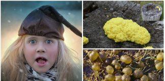 El nostoc, la mantequilla de brujas y la jalea de trol