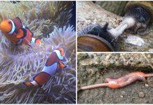 Animales hermafroditas. ¿Cuáles son? ¿Cómo funcionan?