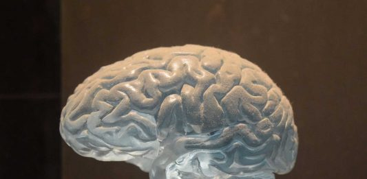 ¿Por qué nuestro cerebro tiene arrugas? ¡Descúbrelo!